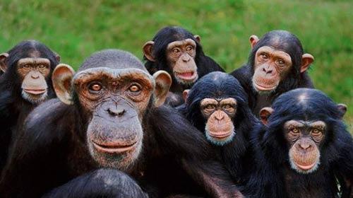 Maymunlar Hata Yapıyor, Ama….
