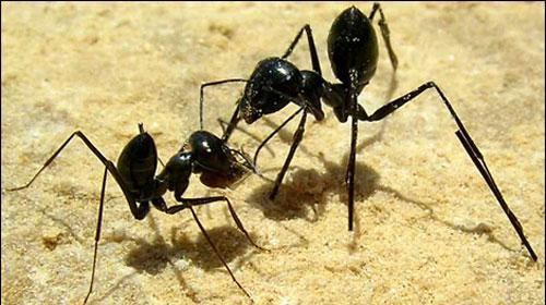 Trafik Sorununu Karınca Sistemi