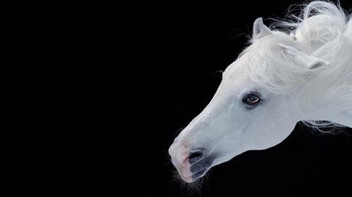 At Isırdı Bin 500 Lira Tazminat Kazandı