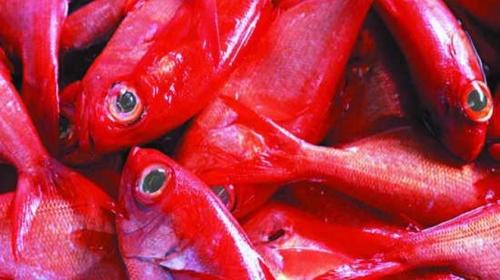 İki Yazar ve Kırmızı Balık Cinayeti