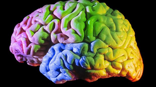 Beynin en iyi çalıştığı yaş: 24