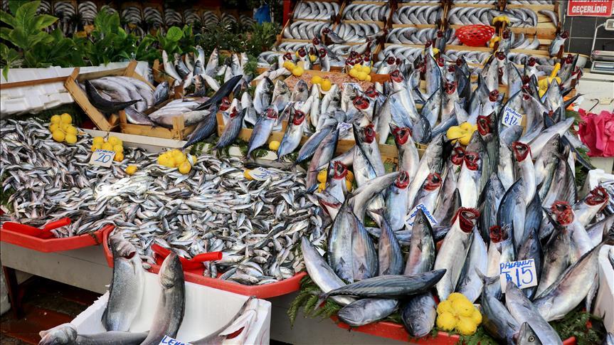 Palamut bolluğu hem balıkçıları hem vatandaşı sevindiriyor