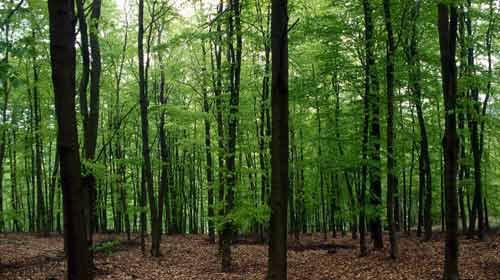 Ağaçlar Güneş Enerjisiyle Kurtuldu
