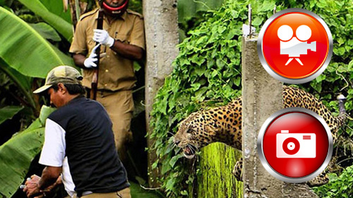 Hindistan'da Leopar Dehşeti