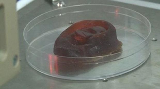 Laboratuvarda burun ve kulak üretilecek