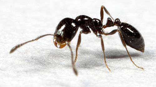 65 Milyon Yıl Sonra Süper Asker Karınca!