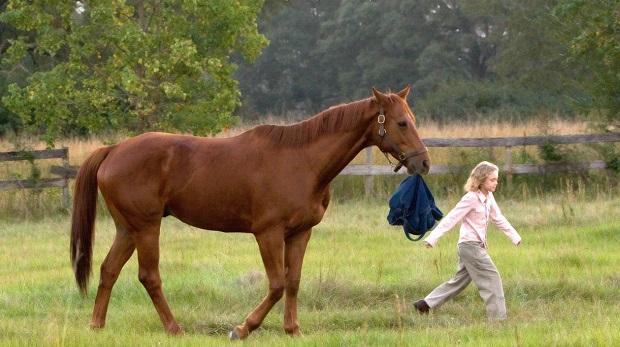 Atları konu alan 8 film