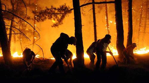 Orman Yangınlarında Terör İzi