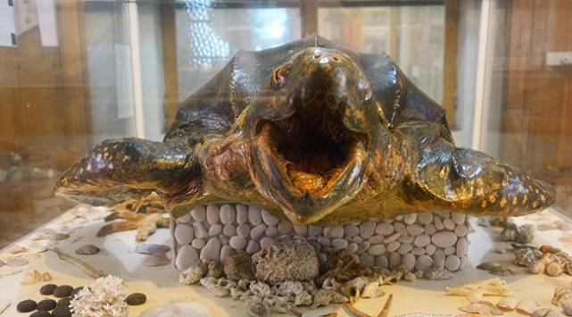 '360 kiloluk dev kaplumbağa' mumyası ilgi çekiyor
