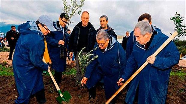 Yırca'da konu zeytin  ağacı değil!