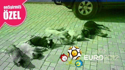 Hayvanseverlerden Ukrayna'ya Ortak Tepki!