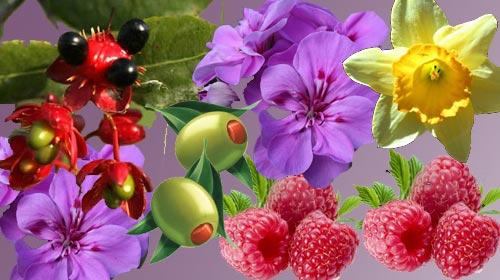 Hangi Bitki Hangi Hastalığa İyi Geliyor?