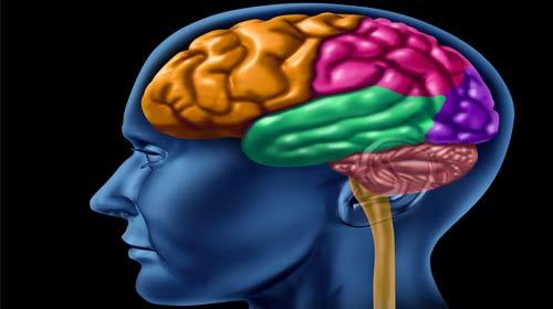 Beyin 10 Yaş Sonrası Anıları Depoluyor