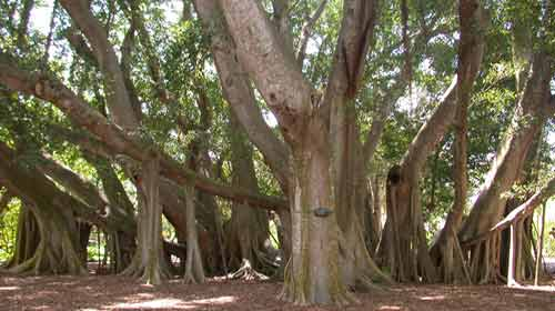 Bu Ağaç Tek Başına Orman