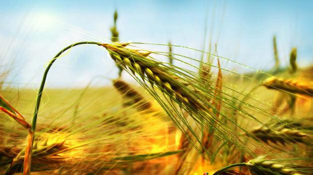 Topraksız tarım nedir?