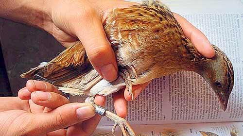 Kuş Gözlemcilerine İyi Haber