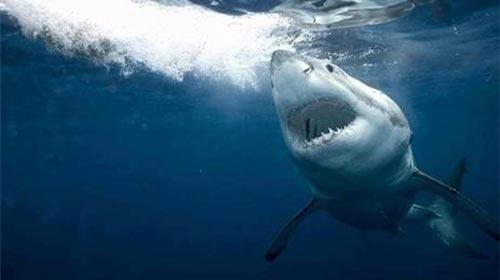 Akdeniz'de Neden Köpekbalığı Var?