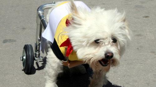 Engelli Hayvanlar İçin Protez