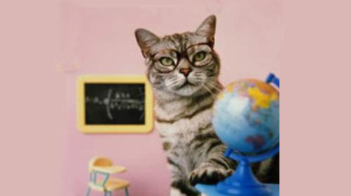 Bu Kedi Lise Mezunu