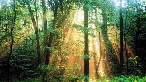 Yanan Ormanlar Unutulmadı