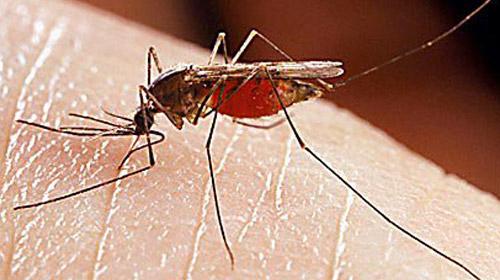 Sivrisinekler kimleri ısırır?
