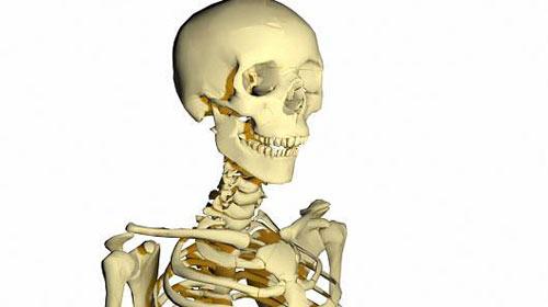 İskelet ve kemik çeşitleri nelerdir?