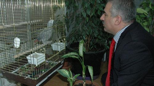 Enkazdan Sağ Çıkan Papağan Depresyonda