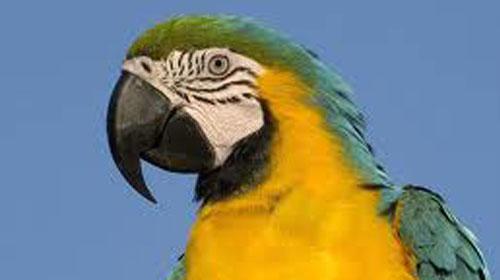 Papağan da Klima Müptelası Oldu!