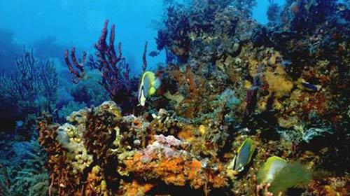Mercanlar Kaçakçılık Tehditi Altında