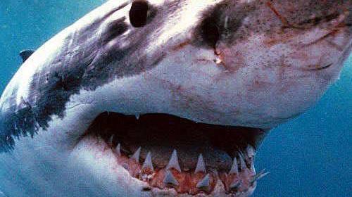 400 Kiloluk Köpekbalığı Yakalandı