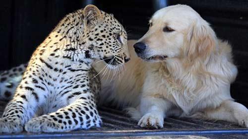 Bu Dostluk Farklı