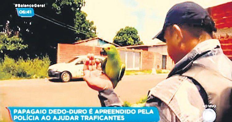 Gözcülük yapıp 'annecim, polis' diyen papağan gözaltına alındı