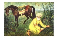İbn el-Baytar kimdir? İbn el-Baytar kısaca hayatı