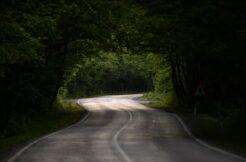 Ağaç tünelli yolu 'yolcularını' bekliyor