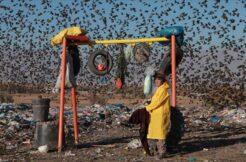 Çevre kirliliği nedeniyle dünyada 13 milyon tür yok olma tehlikesiyle karşı karşıya