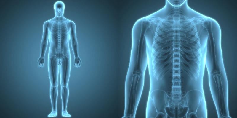 İnsan vücudu hangi elementlerden oluşur?