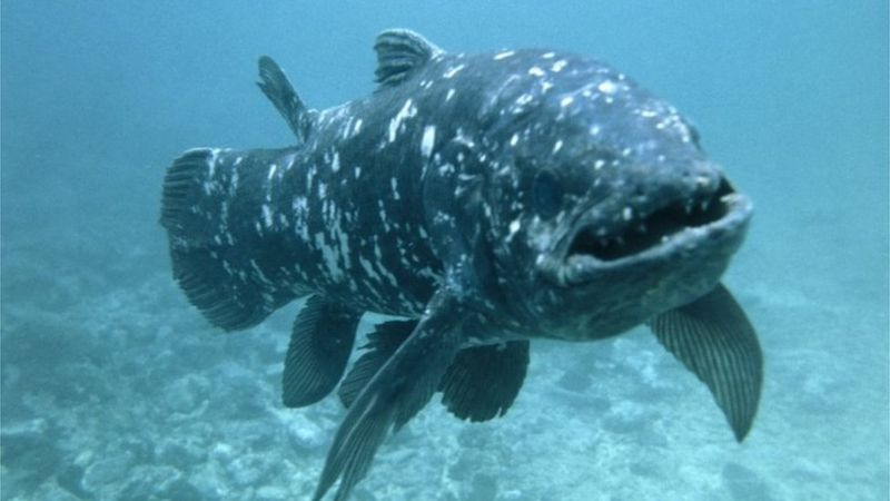 Coelacanth nedir?